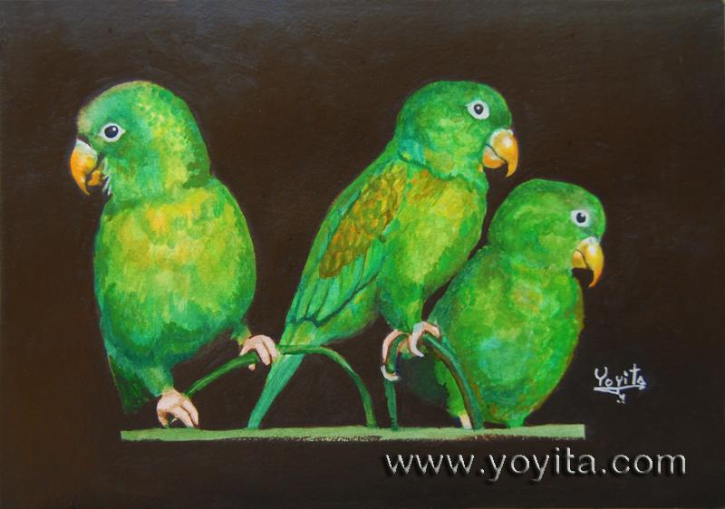 Parakeets chocoyos