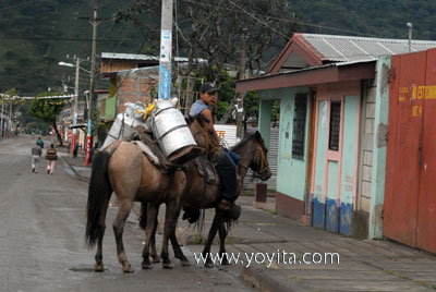 Jinotega milk carrier