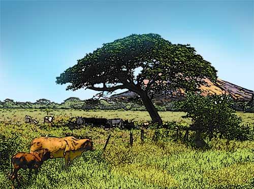 paisaje campesino nicaragua  © Yoyita