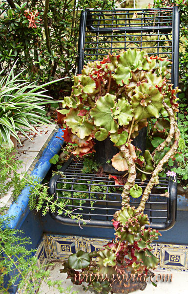 black chair with plant