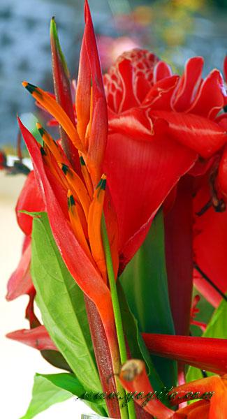 fosforito flor tropical