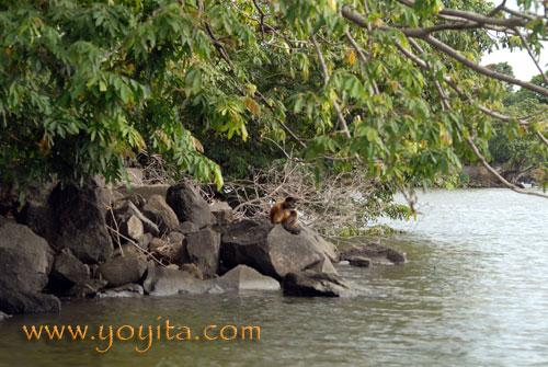 http://www.yoyita.com/Flora_Nicaragua/rainforest monkeys