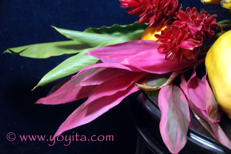 Red and Pink Ginger, Alpinia purpurata The strong colors and forms of these tropical flowers, and their long-lasting quality, make these blooms favorites for tropical cut-flower bouquets and a favorite for ornament and gardens © Yoyita