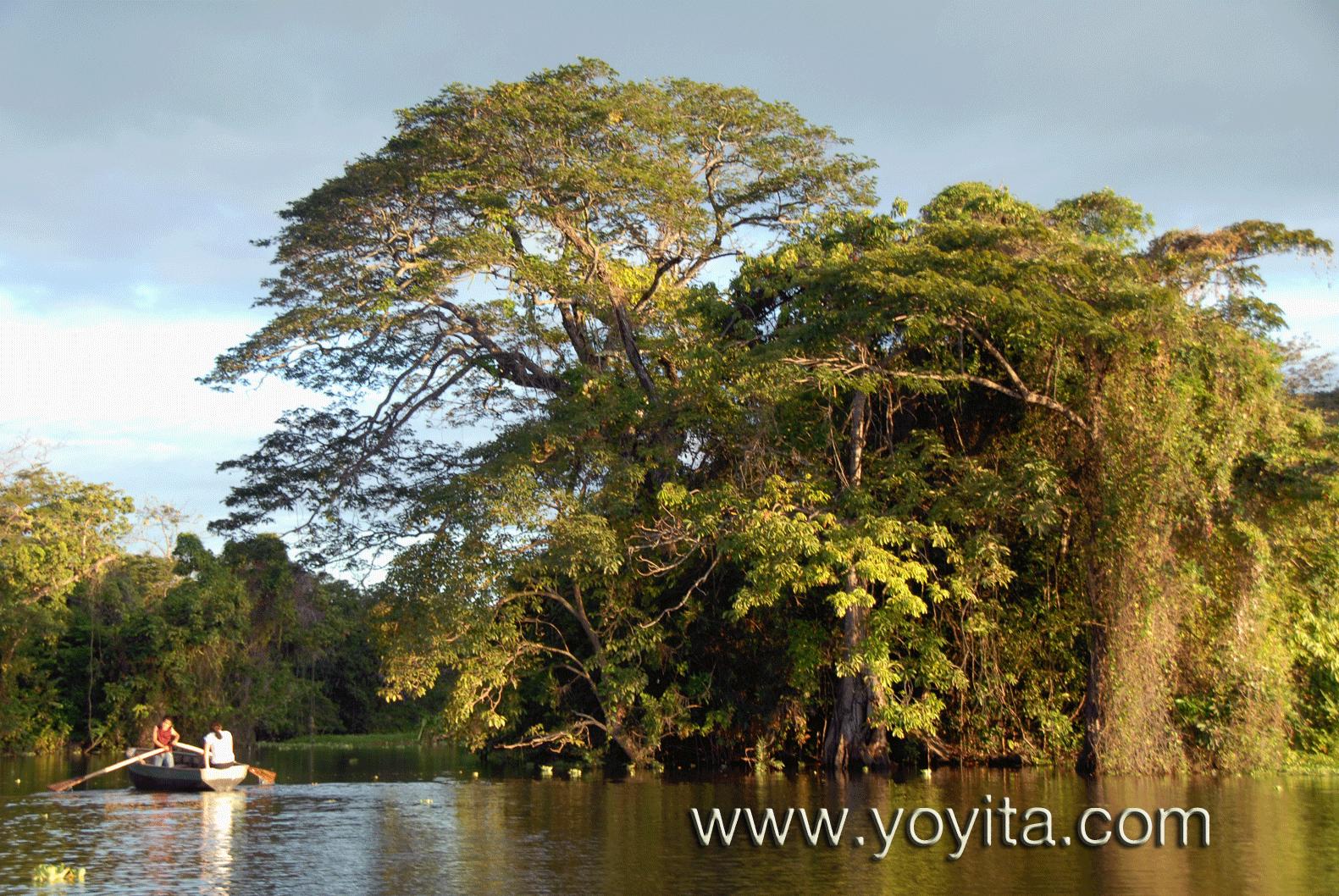 Tropics Granada Nicaragua yoyita