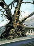 ancient greek tree