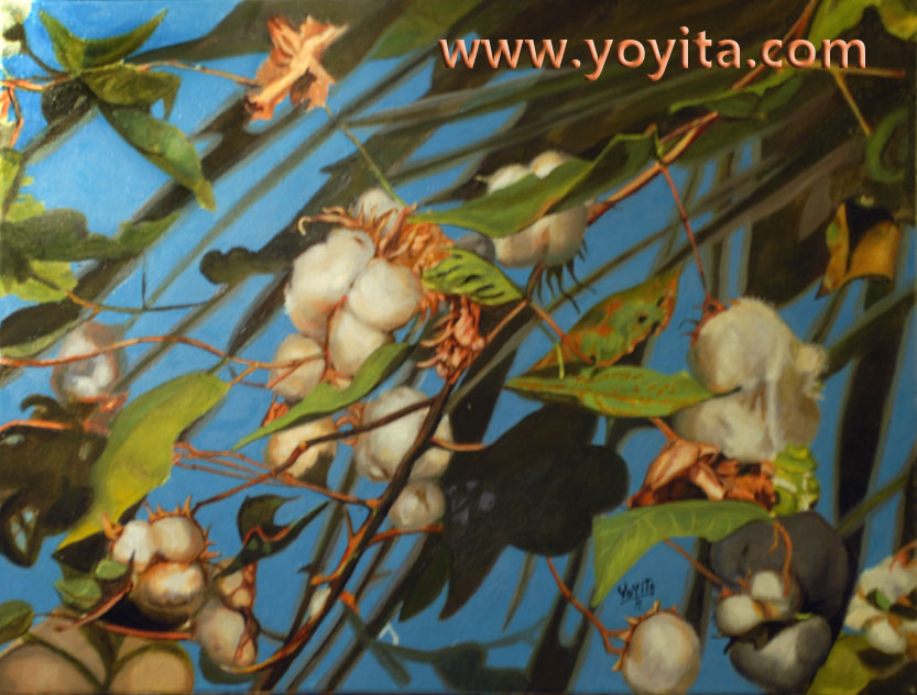 cotton bolls king algodon © Yoyita