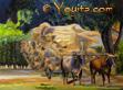 國家園林牛車和牛