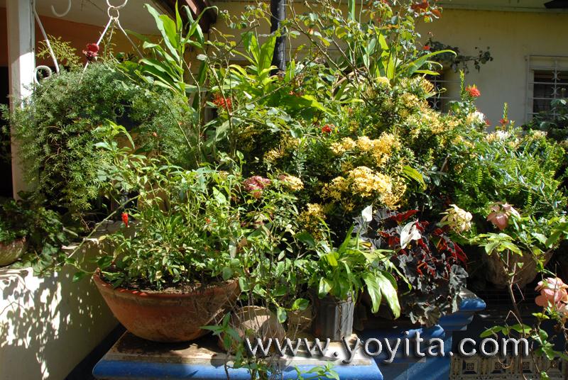 Tropical landscape flowers and plants, Tropical Garden