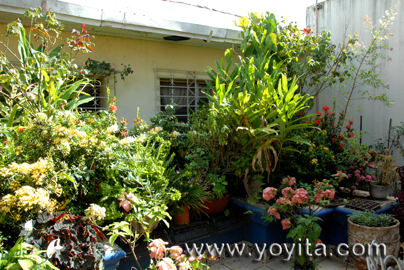 Ornamental plants and tropical flowers