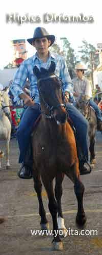 horses caballos hipica