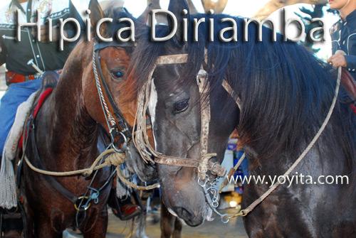 caballos hipica
