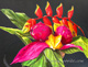 pitayas dragon fruit tropical fruit, nicaragua, costa rica, maui, hawaii, yoyita, still life, oil painting art