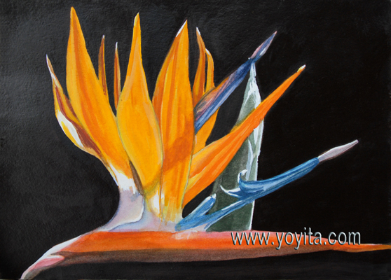 ave del paraiso Strelitzia reginae – Bird of paradise -Crane Flower, Crane Lily exotic tropical flower