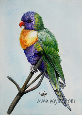 Rainbow Lorikeet  watercolor tropical bird fauna