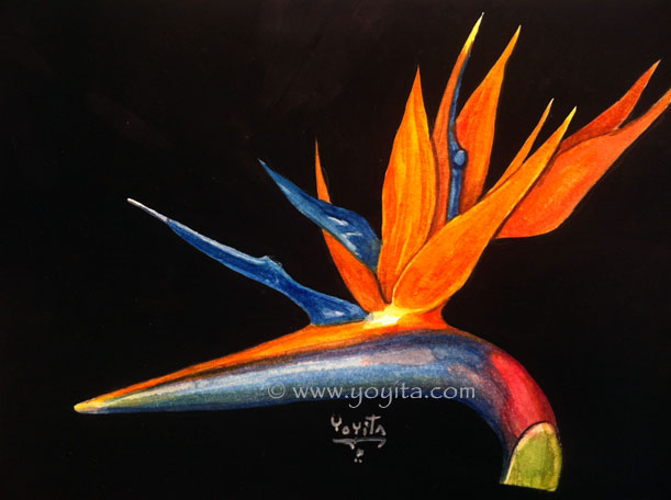 Bird of paradise flower, watercolor by Yoyita Strelitzia reginae Bird of paradise -Crane Flower, Crane Lily Strelitzia reginae   Paradiesvogelblume Kralojska strelicija Strelitzia reginae Strelitzia reginae  Kralowska strelicija    () Puonioji strelicija Paradijsvogelbloem   Strelicja krlewska   Kolibrikukka :Papegojblomma Thin iu  