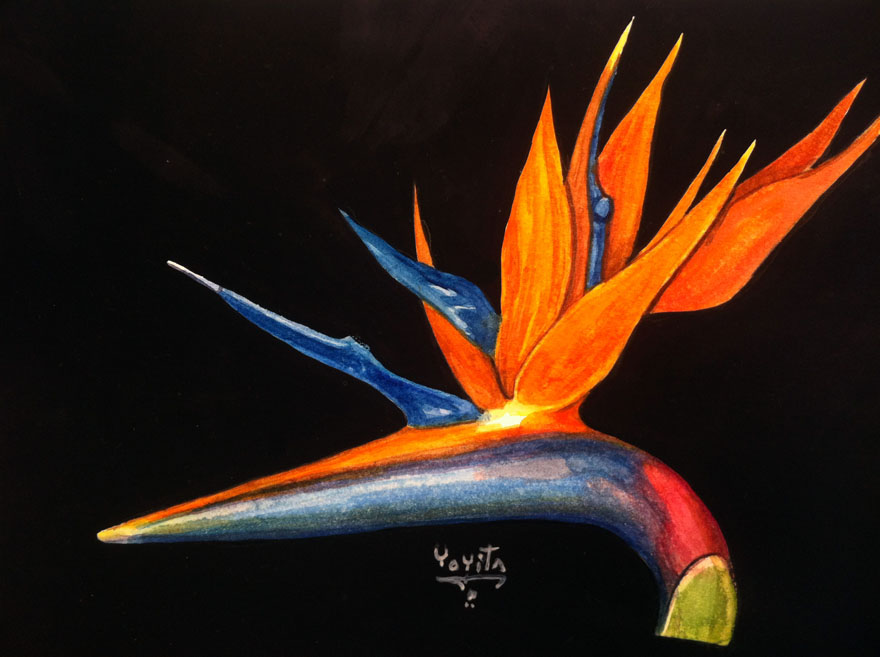 Bird of paradise flower, Strelitzia reginae watercolor by Yoyita exotic tropical flowers