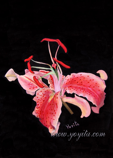 Hibiscus watercolor Hibiscus rosa-sinensis Chinese Hibiscus, Shoeblackplant, Tropical Hibiscus, Pink Hibiscus exotic tropical flowers