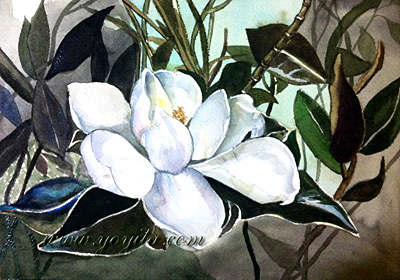 magnolia flower watercolor painting yoyita