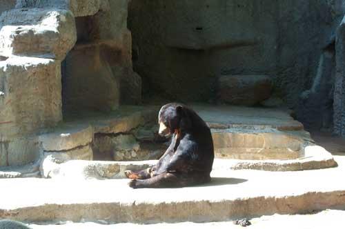 black bear Mississippi  Jackson zoo